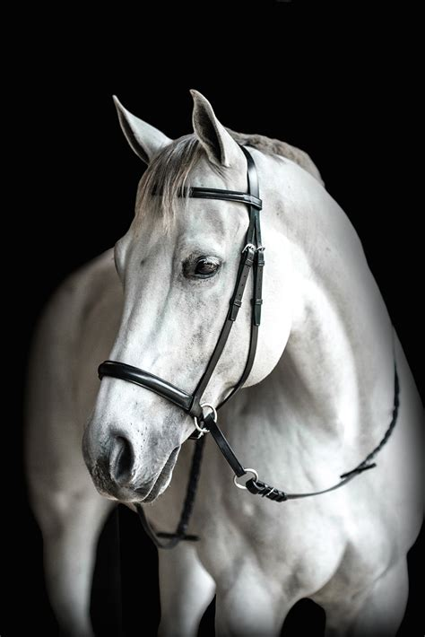 English Raised Headstall - The Bitless Bridle by Dr